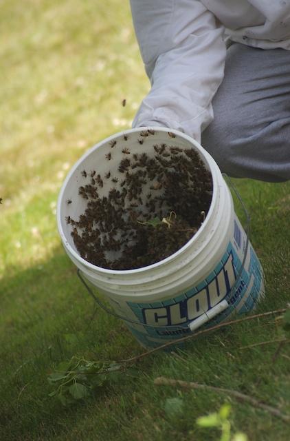 Bucket_of_bees