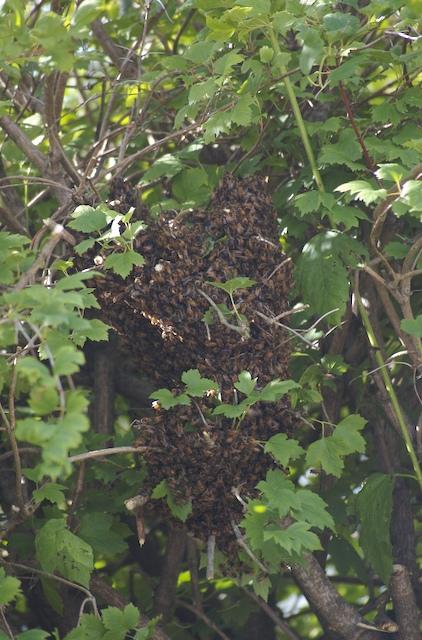 Still_more_hive
