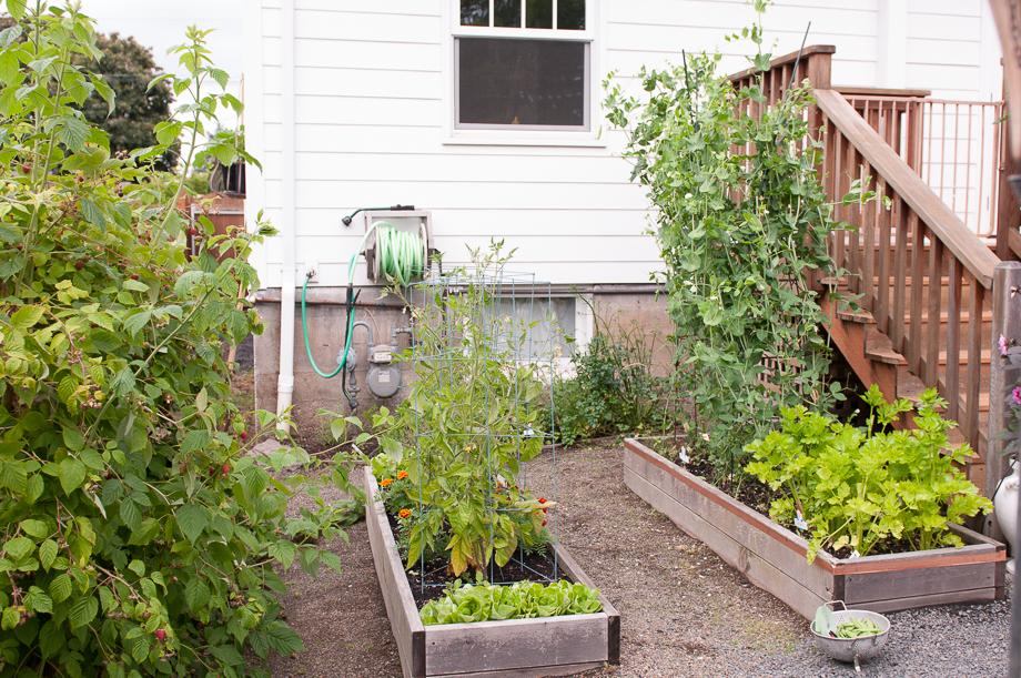june late garden-1