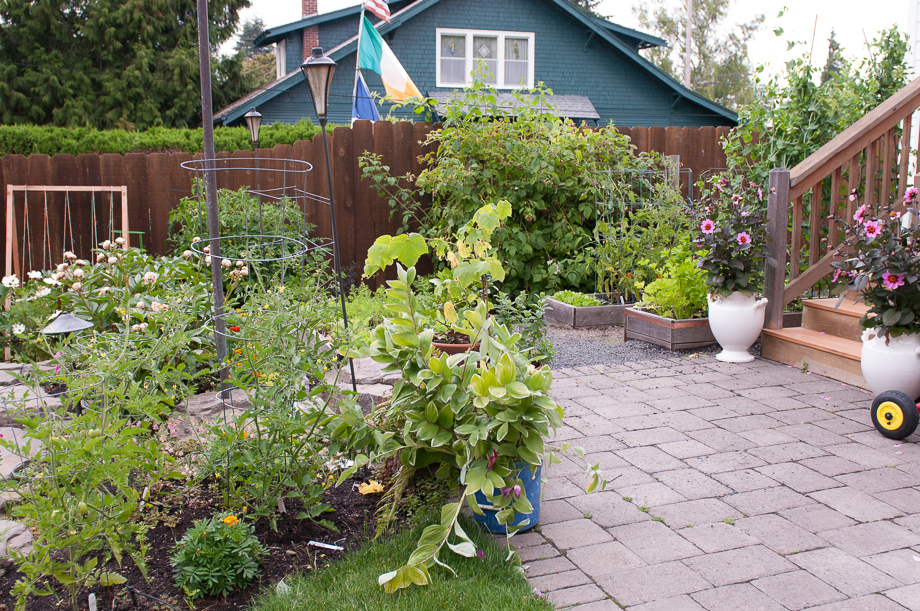 june late garden-2