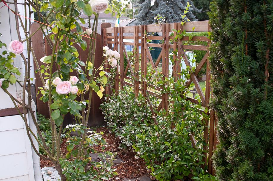 july garden-12