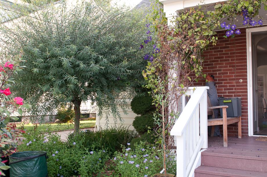 july garden-15