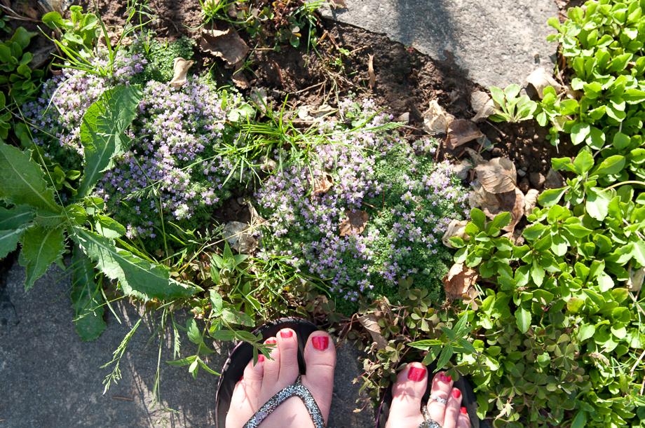 july garden-16