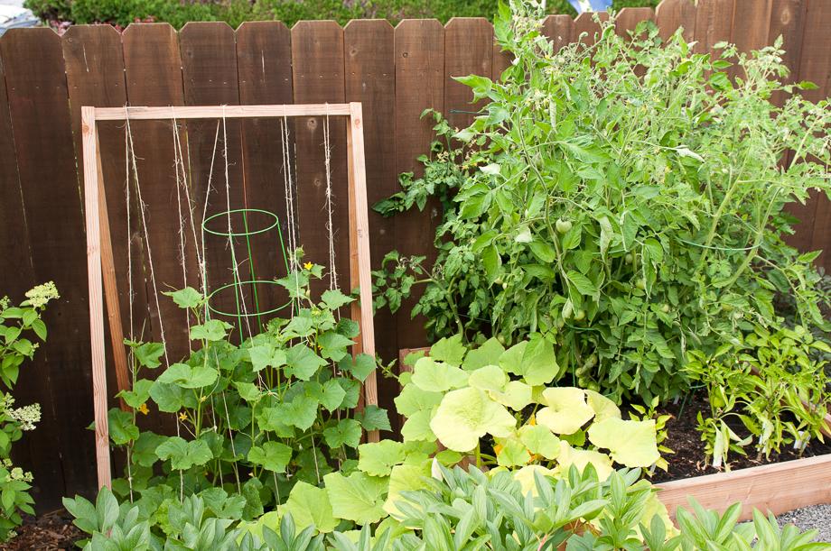 july garden-2