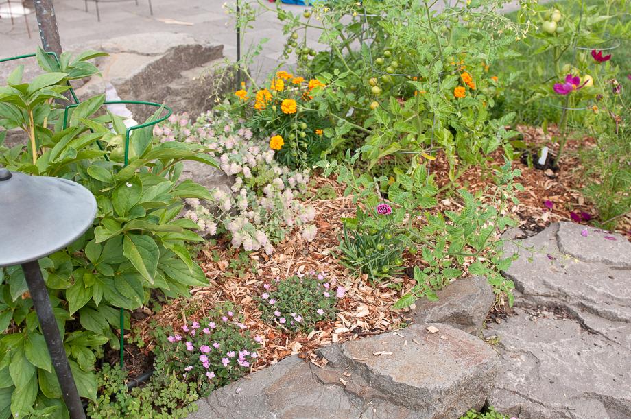 july garden-3