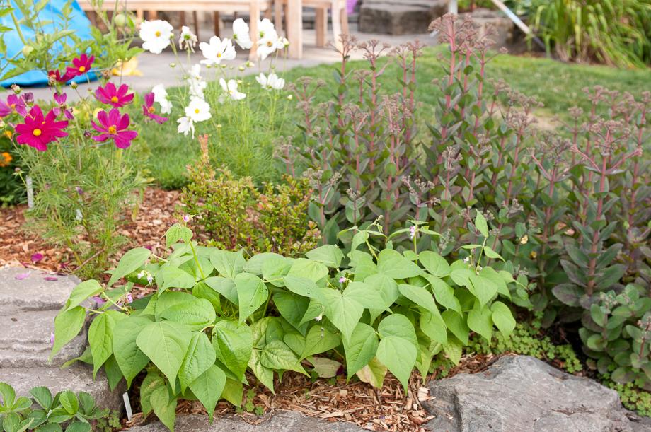 july garden-4