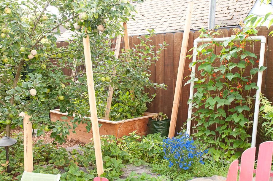 july garden-5