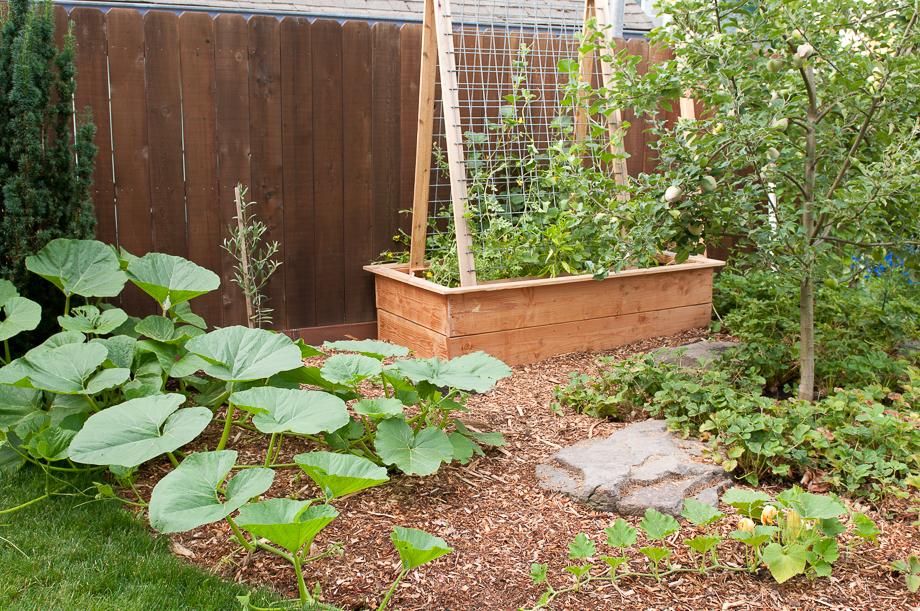 july garden-7