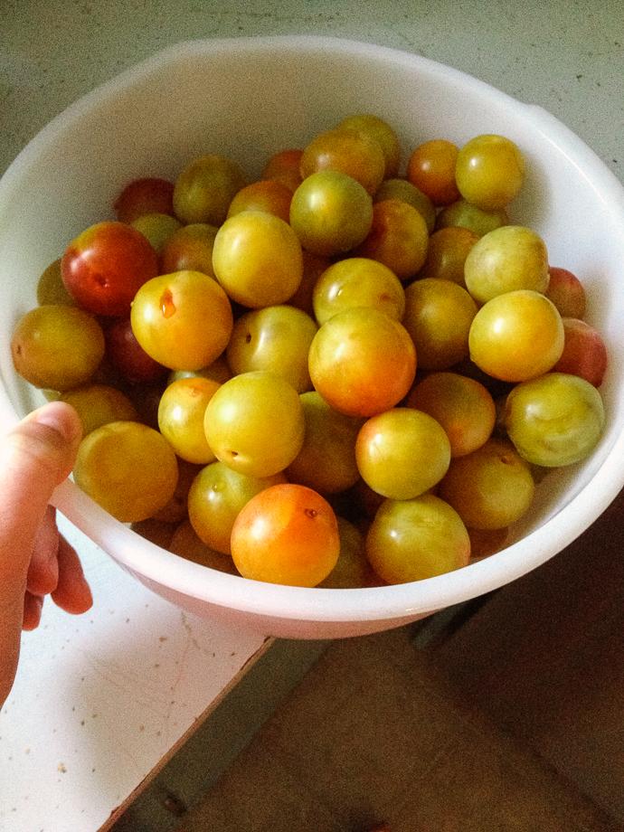 plums-1