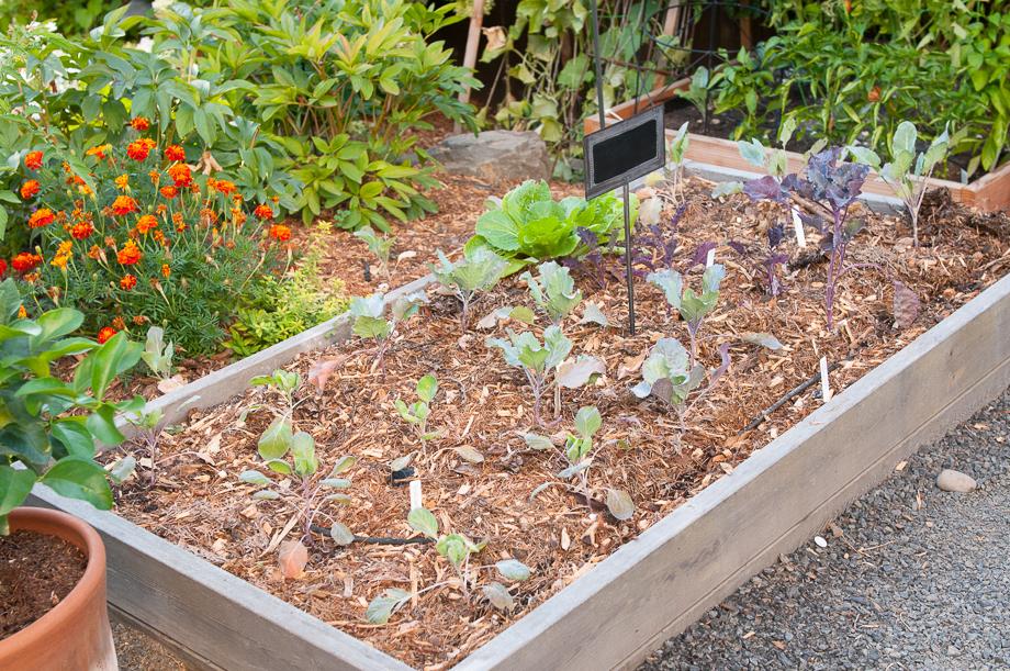 garden end august-1