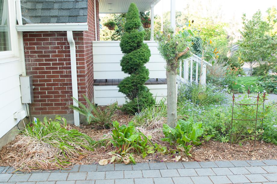 garden end august-13