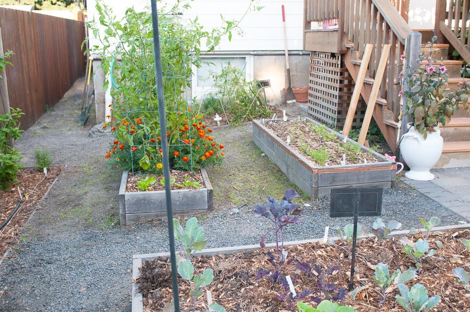 garden end august-2