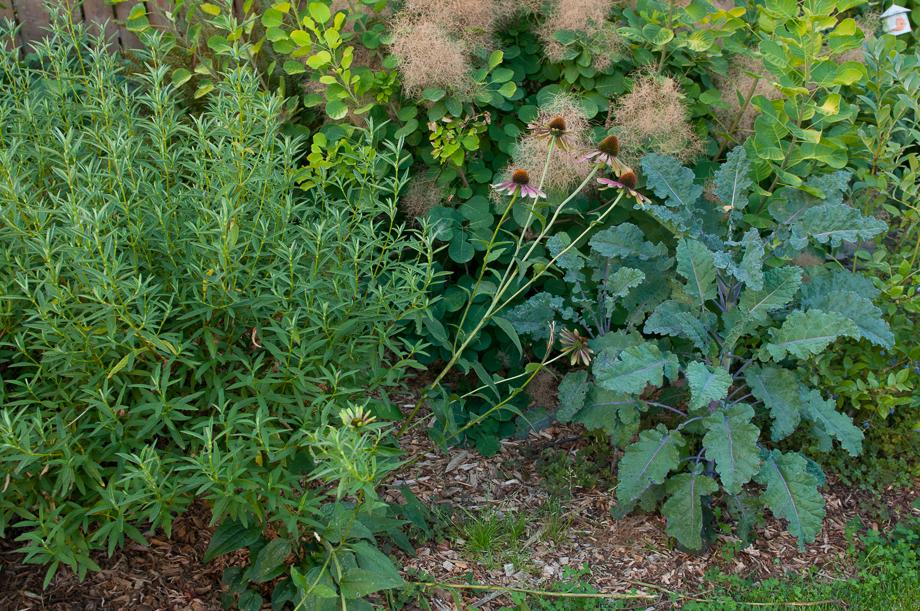garden end august-5