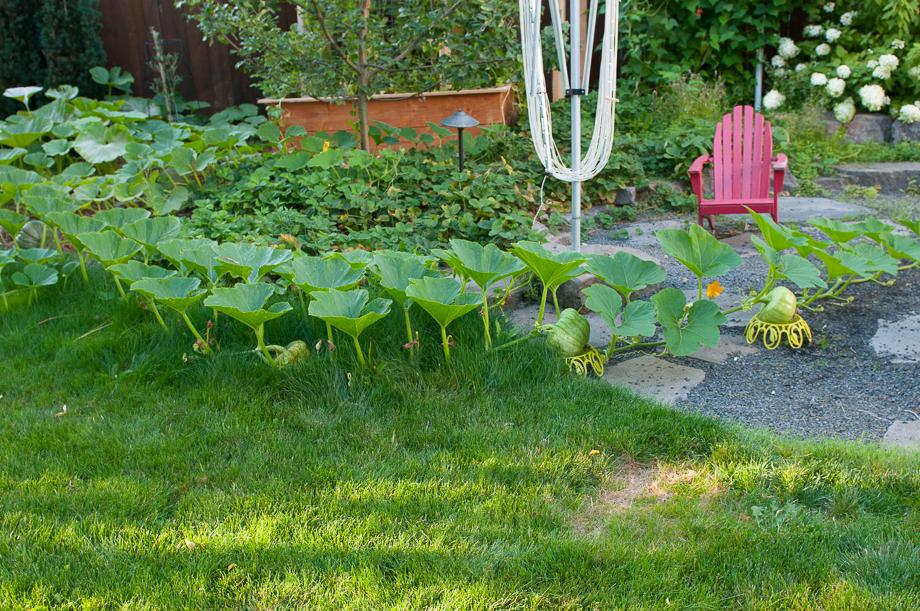garden end august-6