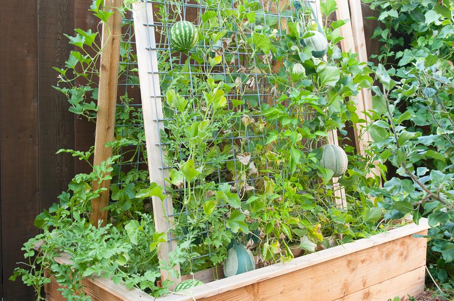 garden end august-7