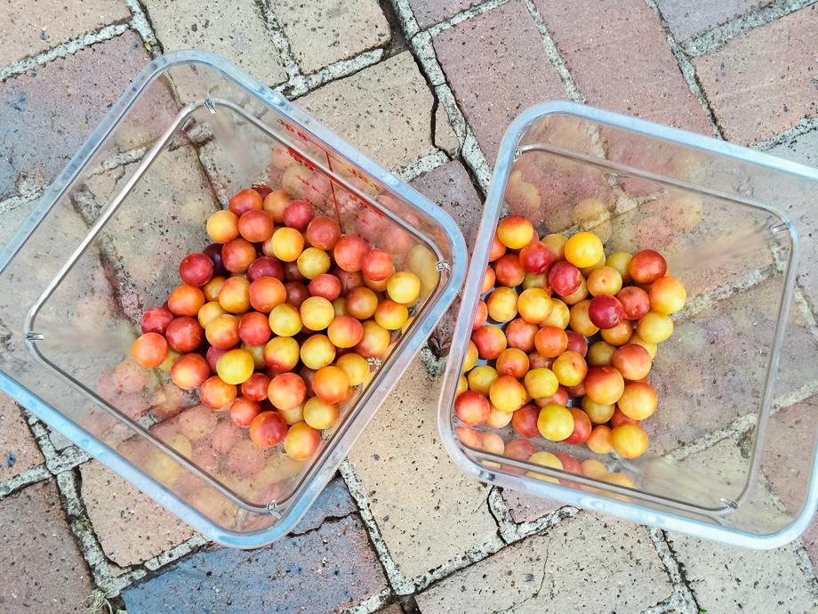 garden plums-1