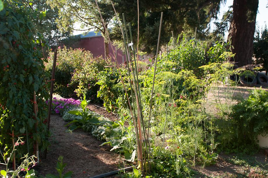 master garden-11