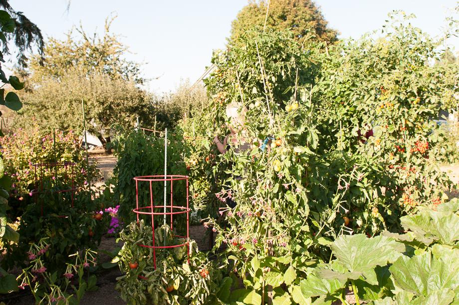 master garden-9