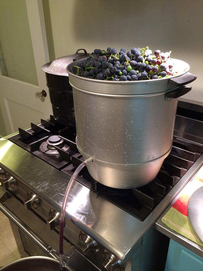 sept 25 grape juice-1