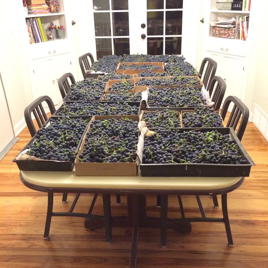 sept 25 grapes on table-1