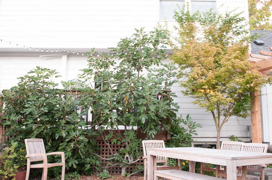 october garden-10