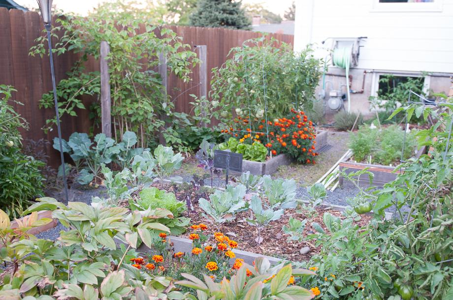 october garden-4