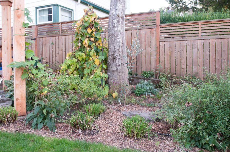 october garden-8